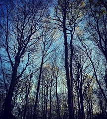 Branching (lucycooper4) Tags: monmouth sky trees woods nature