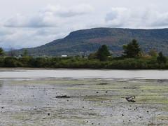 Threegret Day (amyboemig) Tags: greategrets white egret wading
