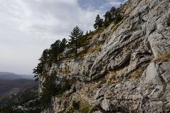 On the edge (Goran Joka) Tags: edge pine cliff crag rock rocky mountain mountaineering climbing mtmaganik maganik montenegro landscape nature outdoor sky