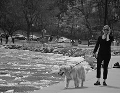 Record breaking late ice out on Lake Harriet (minnepixel) Tags: blackandwhite woman dog lake ice goldenretriever canon frozen blackwhite spring south cellphone minneapolis sheets mpls walker harriet blonde leash icesheets latespring iceout southminneapolis lakeharriet t4i canonefs18135mmf3556isstm lateiceout