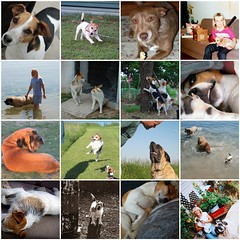 Some Favorites of dogs in my World.  :) (The Wild Roam Free) Tags: dogs englishmastiff mastiff terrier jackrussell