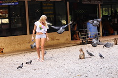 ,, Cones ,, (Jon in Thailand) Tags: dog birds female hair monkey wings movement nikon pigeons streetphotography tourist bin blond nikkor russian youngwoman cones primates d300 icecreamcones flyinghair thailandstreetphotography 70300vr ruralthailand blondjoke asiastreetphotography