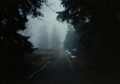 (.sxf) Tags: trees winter mist black film fog analog dark nebel path canonae1 expired schwarzwald blackforest weg rossmann400 vivitar17mm35mc