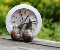 IMG_7927 Clock Watching [Explore] (Alisonashton1) Tags: shells clock circle looking together round snails antennae ticktock clockhands clockwatching