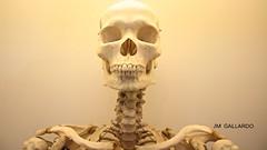 En lo mas interno somos calcio - London (Polycarpio) Tags: inglaterra england london museum skeleton skull unitedkingdom esqueleto human londres medicine bone museo medicina hueso naturalhistorymuseum humano reinounido craneo realbone
