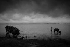Kushtia, Bangladesh (Extinted DiPu) Tags: canon camera kit lens 18mm project padma lifestyle lifestyleofbangladesghipeople lifescape dailylife people fotography photoscape lightroom scout explore exploring flickr monochrome blackandwhite cart water river sky horizon