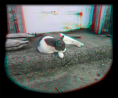 Cyber Chillin' 6 - Anaglyph 3D (DarkOnus) Tags: pennsylvania buckscounty huawei mate8 cell phone 3d stereogram stereography stereo darkonus closeup cyber cat feline sleeping sleep resting chillin animal mammal anaglyph framed