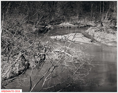 Thick river forest (DelioTO) Tags: 4x5 210mm aph09 autaut beaches blackwhite canada landscape lensed march natparks ontario panx50 rural schneider spring toned trails woods