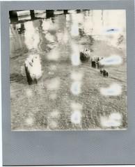 Impossible BW SX-70_081416_300_Nubby Pilings120 (*Snap_Shot*) Tags: impossibleproject expiredfilm silverframe instantfilm sx70 polaroid polaroidcamera impossiblehq squaremag intantfilmsocitey shootfilmstaybroke shootfilm ishootfilm polaroidlove ballard lakewashingtonshipcanal seattle bw blackandwhite blackandwhitephotography impossiblefilm dirtyrollers