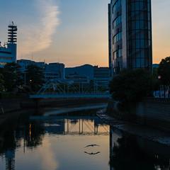 Bird (kmmanaka) Tags: japan nagasaki evening harbor tram dejima meganebashi scooter
