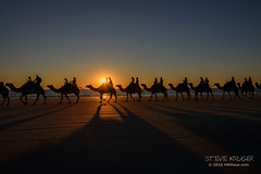 Camels at sunset on Cable Beach Broome-1 (steve4wdaus) Tags: 4wdaus stevekruger sunset wa australia camels cable beach