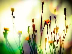 Shadow boxing in a flowered wonderland. (von8itchfisk) Tags: filteredtheshitoutof flowercandy flower flowerporn weed wonderland shadowboxing nature outside mygarden garden vonbitchfisk battisford
