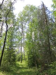 Voyageurs National Park (Saint Louis County, Minnesota) (courthouselover) Tags: minnesota mn saintlouiscounty stlouiscounty voyageursnationalpark nationalparks nationalparksystem landscapes northamerica unitedstates us