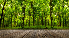forest trees. (lisame0511) Tags: keywordsarchitecture art background beam blank board brown building desk empty fence floor foliage forest frame green home indoor interior leafy leaves light natural nature panel park parquet path pattern picture plank ray retro season shine single sun sunlight tabl table text texture textured tree trunk wall white wood wooden yard keywords architecture ukraine