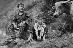 Two brothers and a cow in Sapa, Vietnam (leonardrodriguez) Tags: vietnam people visage portrait vietnamese vietnamien vietnamienne vietnamiens vietnamiti vietnamita bw black white nb noir blanc blackwhite noirblanc asie asia laocai lao cai sapa enfants enfant bambini kids kid buffle bufala