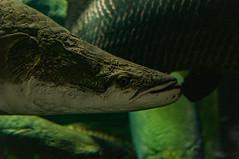 Acuario Agosto 2016 (63) (Fernando Soguero) Tags: acuario zaragoza acuariodezaragoza aragn turismo aquarium nikon d5000 fsoguero fernandosoguero