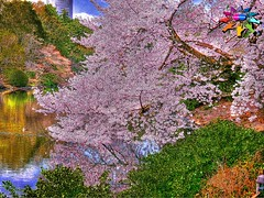 Tokyo=375 (tiokliaw) Tags: addon beauty colourful discovery explore flickraward greatshot highquality inyoureyes japan outdoor plants reflection scenery thebestofday worldbest