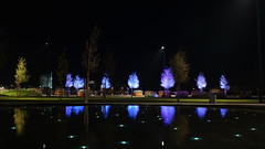 Park of Dreams. Real trees illuminated by artificial lights... (Rind Photo) Tags: light long exposure park trees dreamscape low colours reflections water