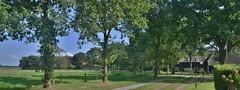 Uffelte (henkmulder887) Tags: uffelte uffelteres es essen esdorp esdorpenlandschap potstal schaap schapen dewoerthe zandweg graan drenthe zwdrenthe holland thenetherlands panorama natuur natur nature natura groen vert green