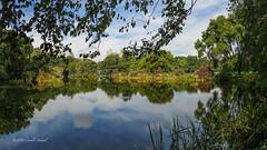 Turtle Pond Reflections (CVerwaal) Tags: autumn centralpark turtlepond newyork ny usa sonyrx100iii