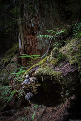 patriarchs_010 (Sascha G Photography) Tags: washingtonstate nikon d7200 roadtrip august summer hike hiking nature landscape scenery lake mountains mountrainier rainier nationalpark grove trees
