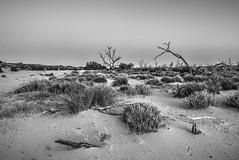 Menindee Lake bed (Stuart-Cohen) Tags: menindee sunsetstrip lake bw