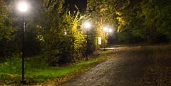 Night Road (vladvizante) Tags: night road countryside 50mm dark f18 darkness forest light pole bulbs nature manmade high iso 3200 nikon d3300 romania