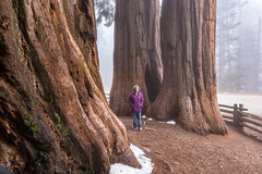 _MG_1208.jpg (nbowmanaz) Tags: california southweststates unitedstates sequoia places