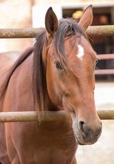 In between (Yvonne L Sweden) Tags: hst sweden roadtrip portrait horse taxinge september
