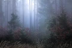 Elsewhere (Petr Skora) Tags: les mlha mood nature forest woods tree trees fog light