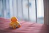 His Duckling ((^_^) Hendrick) Tags: babytoy duckling toy car nikon df nikondf nikkor50mmf12 bokeh nikkor 50mm f12 vsco malaysia