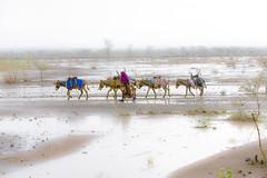 On the road. In the rain. Afar. Ethiopia (courregesg) Tags: ethiopia nomad afar rain ethnic tribe