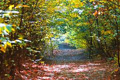 (Alin B.) Tags: alin brotea nature autumn fall toamna september october trees woods forest rust rusty
