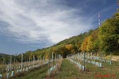 IMG_9217 (Pfluegl) Tags: wien vienna stadtwanderweg wandern wanderweg 1a sww kahlenberg leopoldsberg herbst autumn fall chpfluegl chpflgl christian pflgl pfluegl austria sterreich europa europe hikking wein wine