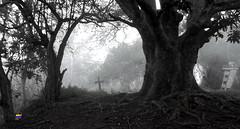 KNOCH - LA ALPARGATA (vila Extremo) Tags: knoch knoche mausoleo montaa mount vargas trekking elavila senderismo warairarepano waraira blackandwhite bw bn cruz neblina fog