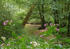 Geldernsch-Nierskanaal (joeke pieters) Tags: 1290245 panasonicdmcfz150 geldernschnierskanaal maasduinen dehamert limburgslandschap limburg nederland netherlands holland stroom beek stream landschap landscape landschaft paysage
