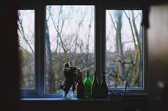 (aniehadjigavriel) Tags: symmetry photography minimalism window flowers bottles wine tree branches christmas focus everyday