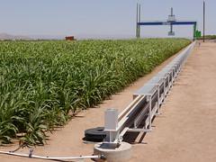 A giant electronic scanner in Maricopa, Arizona (USDAgov) Tags: arizona ars sorghum energy biofuels biofuel departmentofenergy universityofarizona universityofillinois kansasstateuniversity texasamuniversity clemsonuniversity nationalsciencefoundation climatechange bioenergy crops terra