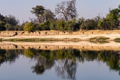 20160827_GreenZambeziReflections_MCM-3 (mcmessner) Tags: africa bjadventures blue livingston reflection river rorschak southafrica2016 sunrise sunriseboatride tongabezilodge zambeziriver zambia livinstone
