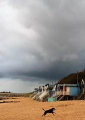 Norfolk (redshoesd) Tags: norfolk coastal coast seaside beach sky clouds beachhuts dog wellsnextthesea view