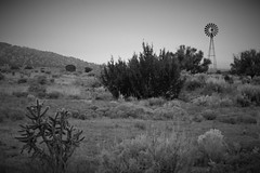 West Texas windmill (WILSON-53) Tags: desert prairie water wildlife outside scrubbrush blackandwhite windmill westtexas
