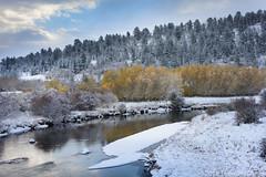 October Snow (Tom's Macro and Nature Photographs) Tags: naturephotography landscapephotography fallcolor fall river aspen pine montana snow eastrosebudcanyon eastrosebud autumn
