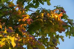 Autumn is coming (Rudi Pauwels) Tags: goteborg gothenburg sverige sweden schweden autumn fall herbst colors orange red green blue zoom tele tamron 18270mm tamron18270mm nikon d7100 nikond7100