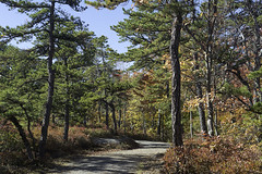 DSC_3272 (Stephen Biebel Photography) Tags: landscape northeastern leaves changing autumn fall october minnewaska newyork woods forsest trees hiking overlook scenic vistas view colors