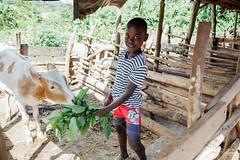UG1605_175 (Heifer International) Tags: uganda ug
