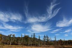Autumn sky (Teruhide Tomori) Tags: landscape sky clouds forest tree nagano japan field nature wetland            autumn  norikura
