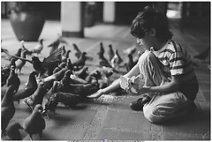 Fotografía Análoga -  Cámara Zenit - Lente 50 mm f 1.8 - Niño y Palomas (Juan Camilo Bedoya Vargas) Tags: film analog 35mm 50mm bellasartes zenit medellín lente50mm análoga fotografíaanáloga juancamilobedoyavargas bellasartesmedellín