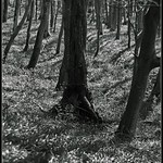 Depth of Forest thumbnail