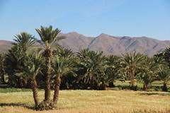 Marocco (Elidor) Tags: marocco oasi
