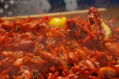 Steamed Mudbugs (Scottwdw) Tags: city red newyork hot festival outdoors spring nikon outdoor central crawfish steam cny syracuse cooked mudbugs clintonsquare onondagacounty d700 scottthomasphotography afsnikkor28300mmf3556gedvr